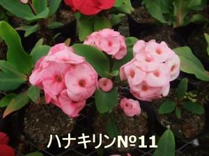 ha-ha(11)