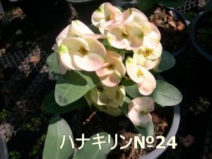 ha-ha(24)